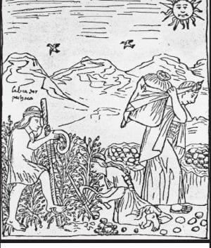 Inca's oogsten aardappels (1615)
