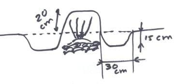 asperge tekening 3