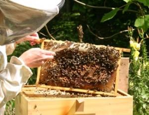 Bijenkastcontrole 5