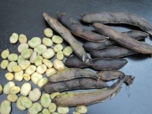 De peulen en de tuinbonenzaden