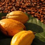 Origin Chocolate Event