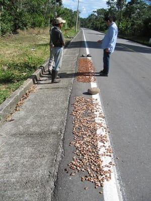 Daar kunnen we geen chocola van maken - Drogen langs de weg