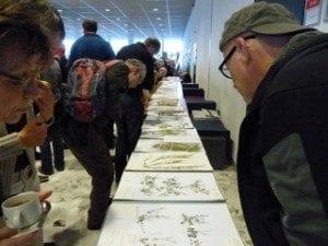 FLORON-dag herbariummateriaal  300x