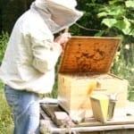 Bijenkastcontrole_thumb 300x300