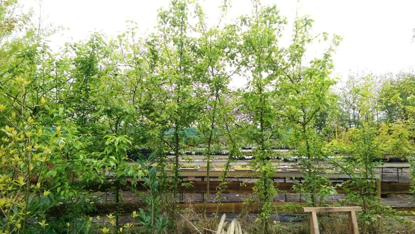 Lowgardens – labyrint pyrus
