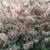Lowgardens – rijk bloeiende appel
