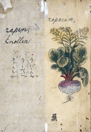 L0030109 Japanese Herbal, 17th century