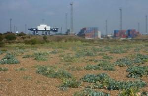 De bronnen van onze cultuurplanten - zeekool
