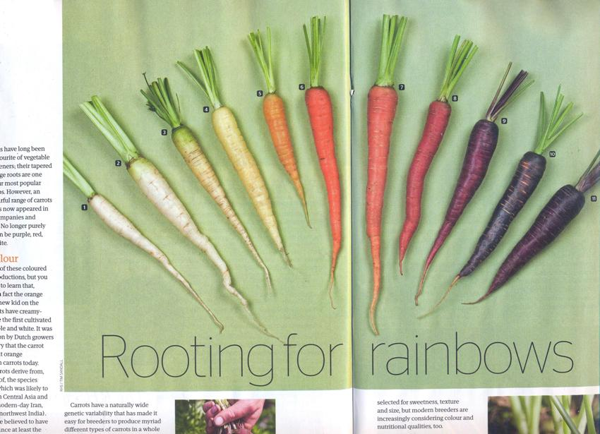The Garden over wortels 850x615