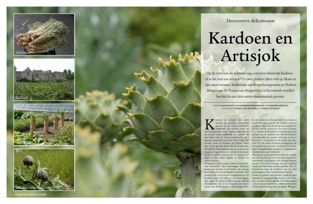 De Tuin in Vier Seizoenen - zomer 2015 - artisjok en kardoen
