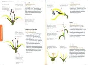 Zelf Zaden Telen - bloemetjes