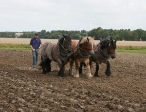 Sorghum zaaien met paardenkracht
