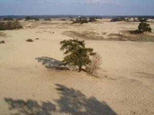 Kootwijkerzand - foto: Wiki-Commons