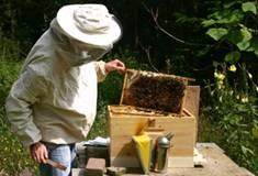 Bijenkastcontrole 4.jpg