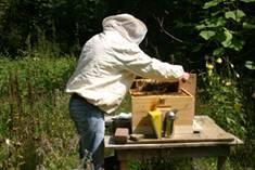 Bijenkastcontrole 6.jpg