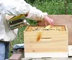 Bijenkastcontrole 7.jpg