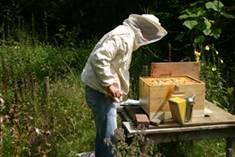 Bijenkastcontrole 3.jpg